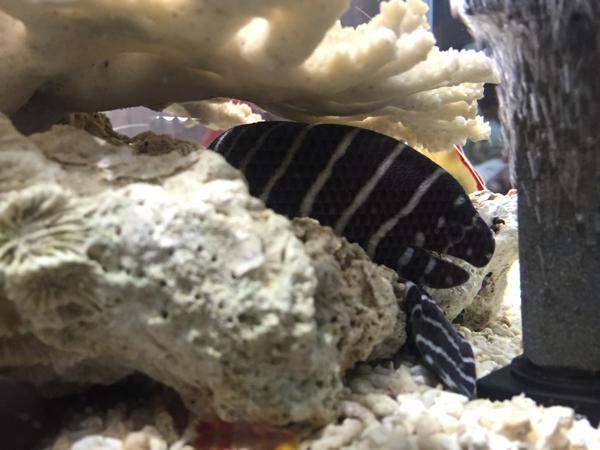 すさみ町立エビとカニの水族館